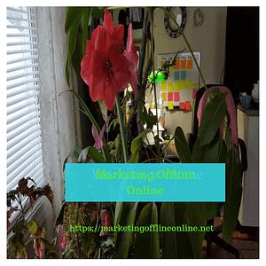 Marketing Offline Online home