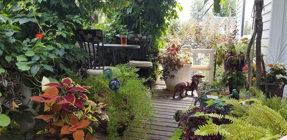 Daisy on porch